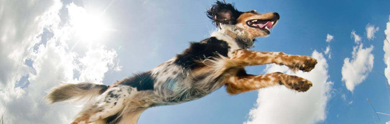 DogHeader2